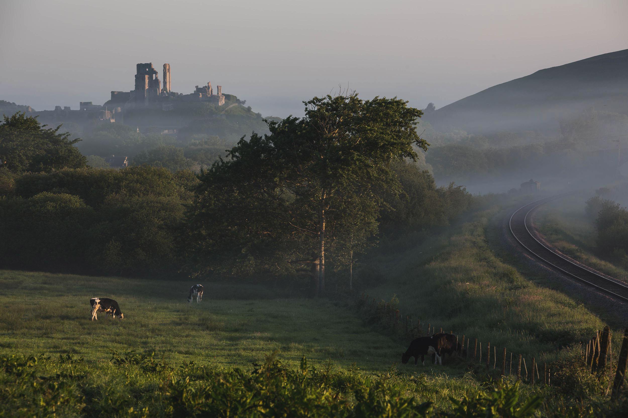 The heart of Dorset